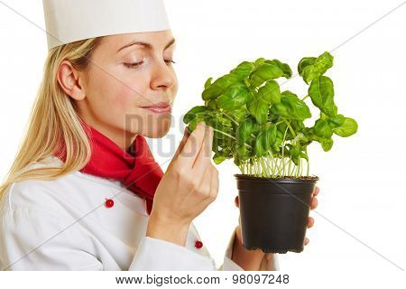Woman as chef cook smelling on a pot of fresh basil herbs