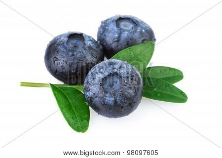 Fresh Blueberries with Leaf Isolated