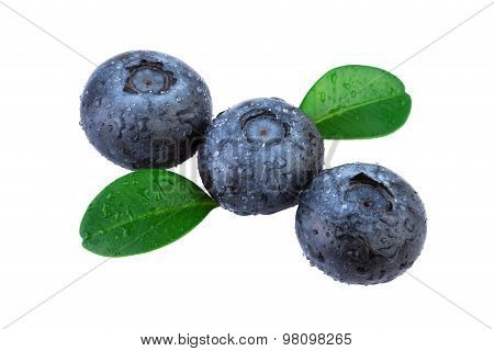 Blueberries diagonal composition isolated