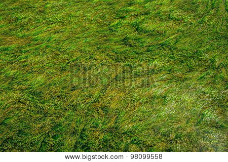 Textures Of The Green Algae