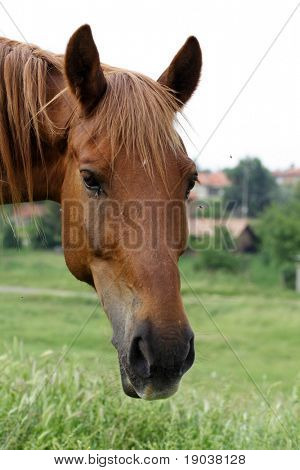 Portrait of a young horse