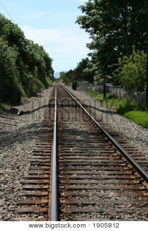 Rail Road Tracks Surrounded By Trees