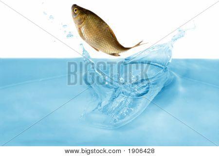 Fish In Jump