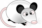 picture of opossum  - opossum with squinting eye - JPG