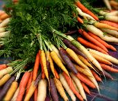 Colorful Organic Carrots