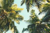 Coconut palm tree on sky background.   Low Angle View. Toned image poster