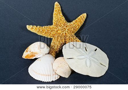 Starfish Shells And Sand Dollar