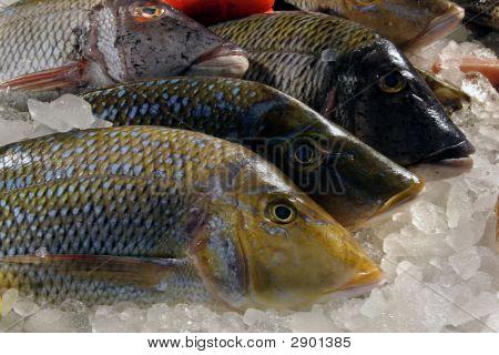 Fish Ice