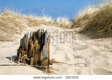 Timber In Sand