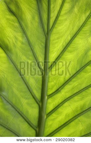 Green leaf closeup (vertical)