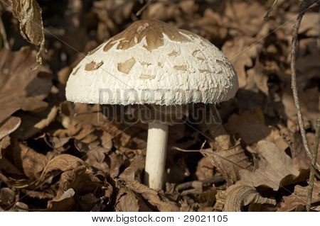 Forest mushrooms growing in autumn, macro closeup with copy space