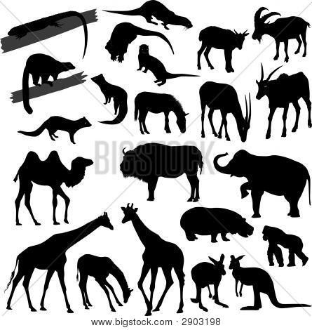 Many Silhouettes Of Different Animals