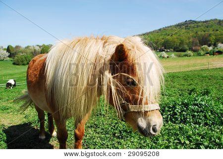 Pony in the pasture