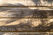 Exotic Tropical Palm Tree Shadow On Wooden Background. Photo At Sunny Summer Day At The Beach. Dry L poster