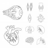 Vector Illustration Of Anatomy And Organ Symbol. Set Of Anatomy And Medical Vector Icon For Stock. poster