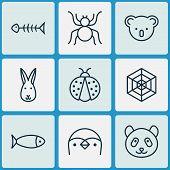 Zoology Icons Set With Koala, Arachnid, Ladybug And Other Seafood Skeleton Elements. Isolated Vector poster