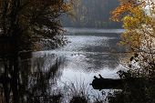 Forest Lake. Ducks On The Lake. Wild Nature. The Nature Of Russia. Autumn Landscape. Park Lake With  poster