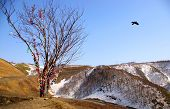 image of nack  - The Mountain landscape. Kholmskiy mouting pass on island Sakhalin. The traditional Tree of Happiness costs On top. This is a nacked tree on which people hang the varicoloured tapes bows.