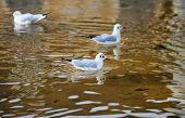 pic of schoenbrunn  - Seagulls in Schoenbrunn Castle Garden - JPG