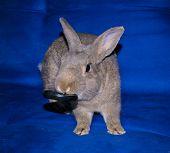 Coward Homes Nice Rabbit Gray Small Rodent poster
