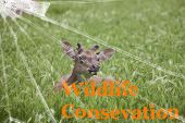 The Text Wildlife Conservation On The Broken Glass. The Background Is Slightly Blurred. Wildlife Con poster