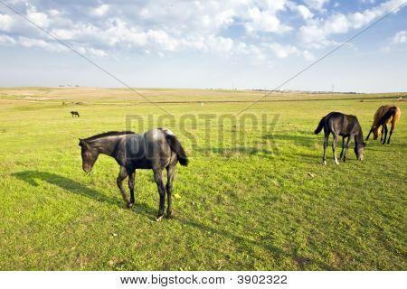 Kansas Horse Pasture