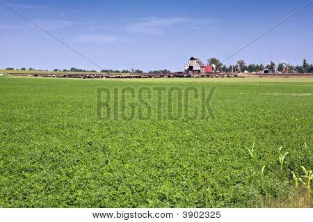 Kansascattlefarm
