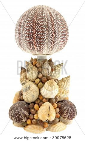 Sea Shell Lamp