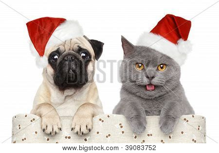 Dog And Cat In Red Christmas Hat