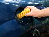 stock photo of ethanol  - parody of ethanol controversy showing a man putting an ear of corn into automobile gas tank - JPG