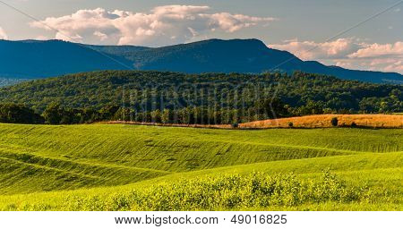 Farm Fields And View Of Massanutten Mountain In The Shenandoah Valley, Virginia.