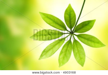 Green Leaf Over Blurred Background