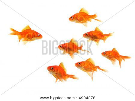 Goldfish Group Leader