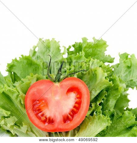 tomatoes on salad green
