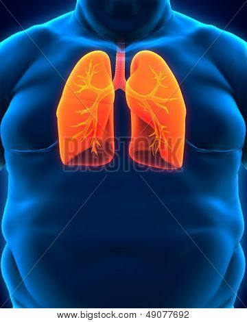 Respiratory System of Overweight Body
