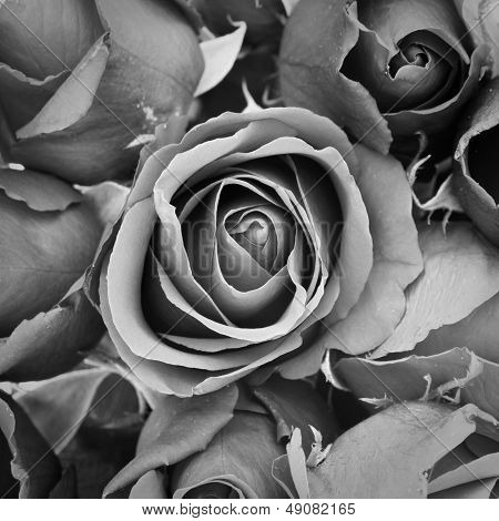 Rose de tristeza