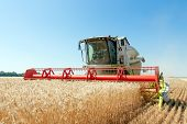 image of combine  - Combine harvests wheat on a field in sunny summer day - JPG