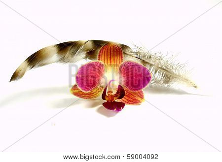 feather with orchid blossom