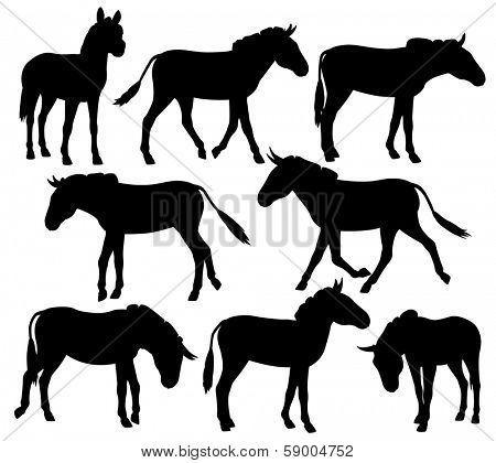 Set of editable vector silhouettes of zebra, ponies or donkeys