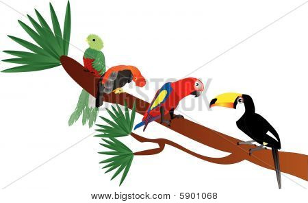 Four tropical birds on a limb illustration