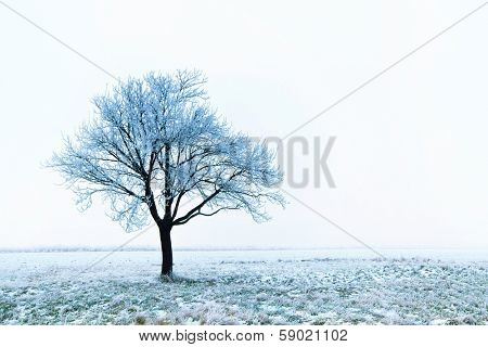 Frost covered tree in winter