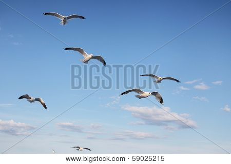 Sea gulls fly behind a ship
