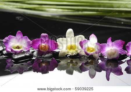 Plam teaxture ,pebbles and colorful orchid