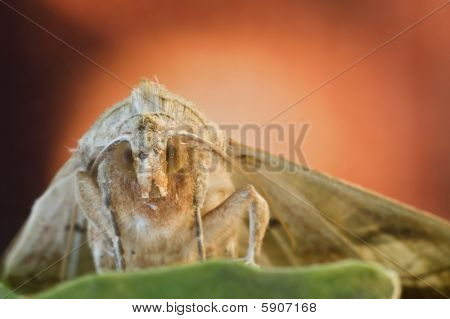 Moth Close-up With Color Background