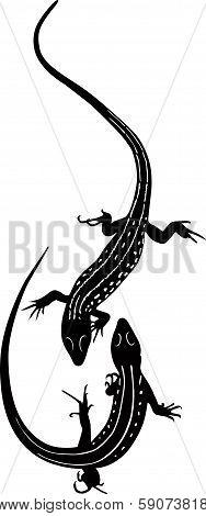 animal lizard