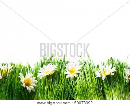 Spring Meadow with Daisies. Grass and Flowers border art Design isolated on White. Nature. Environment concept. Green Nature Background