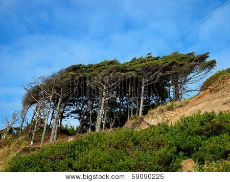 Wind-Swept Trees