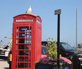 Gull sitting on red telephone kiosk