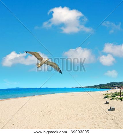 Platamona Seagull