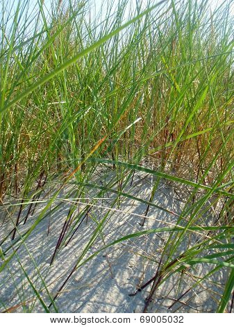 The Grass On Seacoast